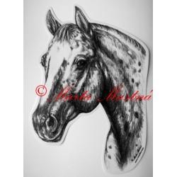 Samolepka appaloosa, western, kůň, koně