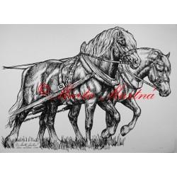 Samolepka koně chladnokrevníci, spřežení, koně