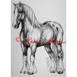 Samolepka kůň shire horse, chladnokrevník, kůň, koně