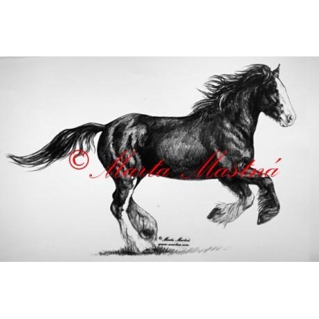 Samolepka kůň chladnokrevník shire horse, irský tinker