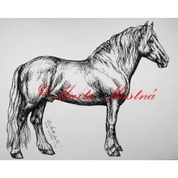 Samolepka chladnokrevník, norik, kůň, koně