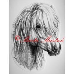 Samolepka shetland, island, kůň, koně