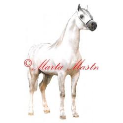 Samolepka kůň arabský plnokrevník