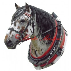 Samolepka slezský norik Nacho Salazar, kůň, koně