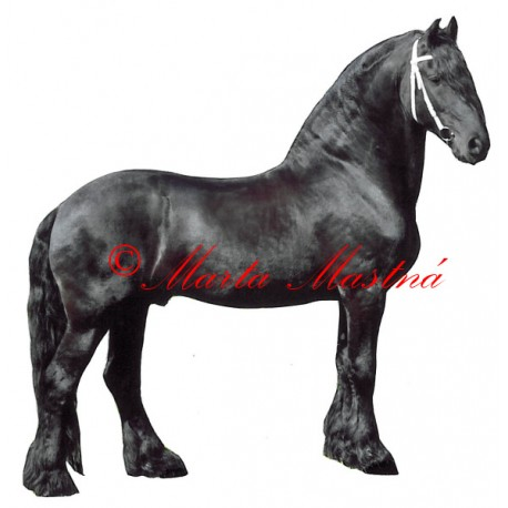 Samolepka kůň fríský Jelle van Lindenhoff