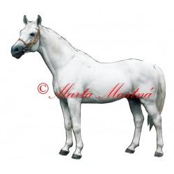 Samolepka kůň bělouš