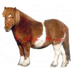 Samolepka kůň shetland pony