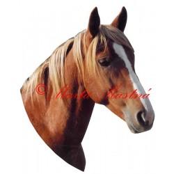 Samolepka kůň ryzák Gaston