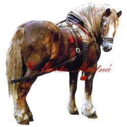 Samolepka českomoravský belgik Makon, chladnokrevník, kůň, koně