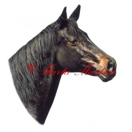 Samolepka kůň teplokrevník Langara
