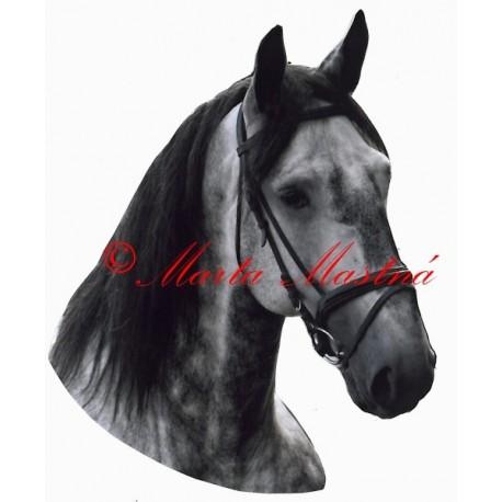 Samolepka kůň teplokrevník grošák