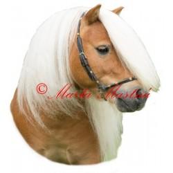 Samolepka shetland pony Locksley Permoník, kůň, koně