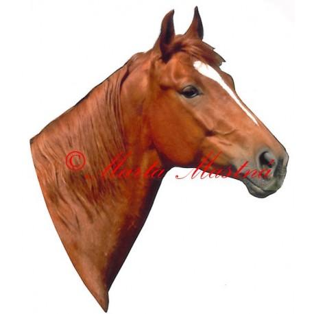 Samolepka kůň teplokrevník ryzák