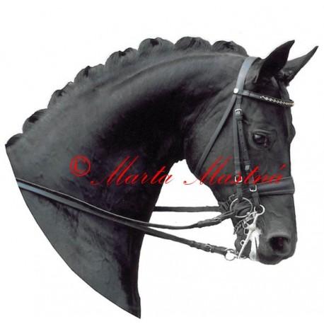 Samolepka kůň teplokrevník , drezura