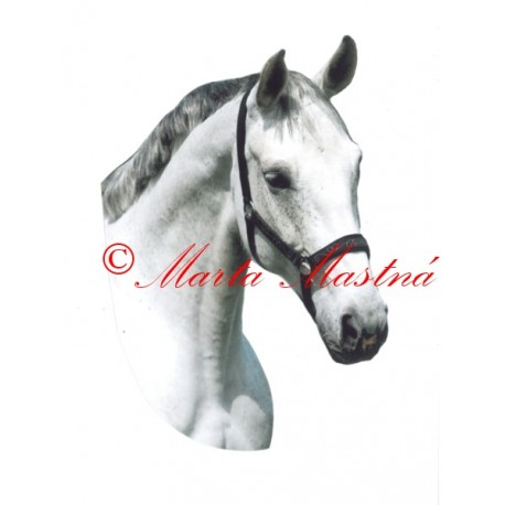 Samolepka kůň český teplokrevník Robona