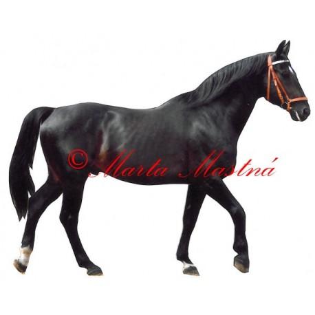 Samolepka kůň teplokrevník, vraník