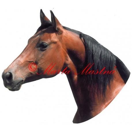 Samolepka kůň quarter horse