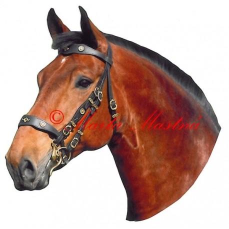 Samolepka kůň hnědák