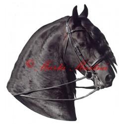 Samolepka frís Pieter van Diphoorn, kůň, koně