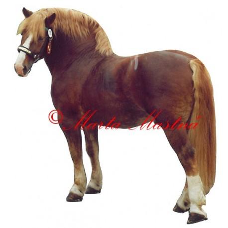 Samolepka kůň českomoravský belgik Barmas