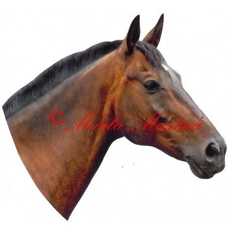 Samolepka kůň český teplokrevník Korádo