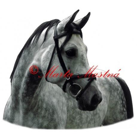 Samolepka kůň arabský, grošák