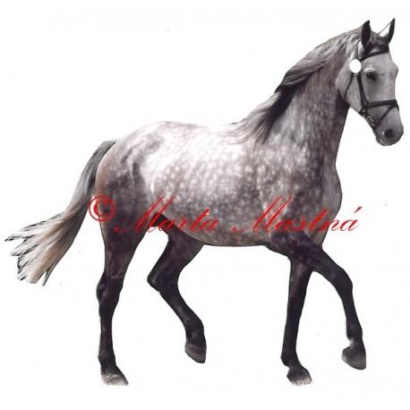 Samolepka kůň grošák