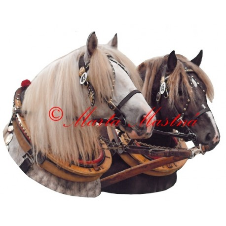 Samolepka kůň českomoravský belgik Agy a Aznar