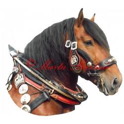Samolepka chladnokrevník, kůň, koně