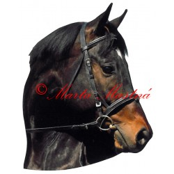 Samolepka anglický plnokrevník Amador, kůň, koně