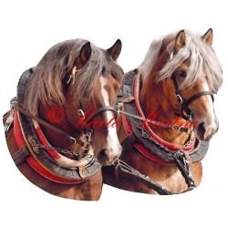 Samolepka chladnokrevní hřebci, kůň, koně