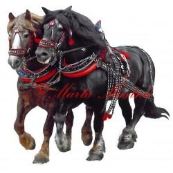 Samolepka chladnokrevní hřebci Makon a Bosbar, kůň, koně