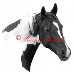 Samolepka paint horse, western, kůň, koně