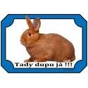 Králíci - rabbits